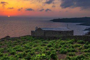 Il vino e la vigna presidio, anche sociale, del territorio: a Pantelleria tornano i giovani