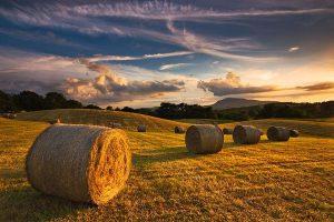 """Arriva il nuovo indice Nomisma sulle """"terre promesse"""" per l'export agroalimentare italiano"""