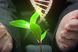 """Anche le piante ottenute da """"mutagenesi"""" sono Ogm: la sentenza della Corte di Giustizia Ue"""