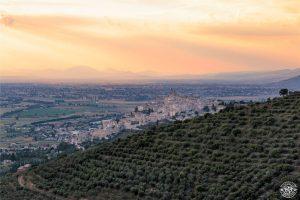 """L'ininterrotta """"Fascia olivata Assisi-Spoleto"""" primo sito italiano nella lista del Giahs Fao"""