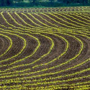 Terra e finanza, nasce IdeA Agro, primo fondo di private equity italiano dedicato all'agricoltura