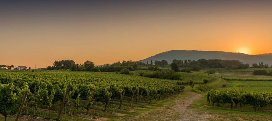 FRANCIACORTA, TERROIR, Su i Quaderni di WineNews