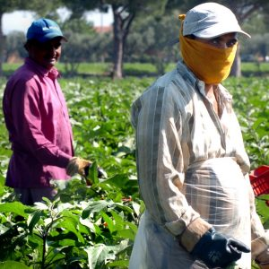 Italia, il 28% dei lavoratori agricoli sono migranti: nel 2017 il 67% senza contratti regolari