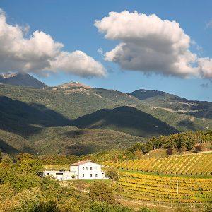 I campioni del vino: affari a 6,2 miliardi di euro, in 19 sopra i 100 milioni di euro di fatturato