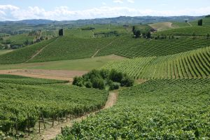 "Barbera d'Asti ""2.0"": Consortium and University of Turin creating a ""sensory map"" of the DOCG"