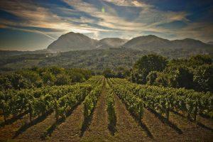 Il Ministro Toninelli apre a revisione Tav in Lugana, Irpinia del vino vs impianto di compostaggio