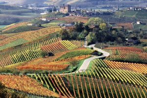 Wines of Langhe, Roero and Monferrato districts are soaring and Prosecco DOCG leads the flight