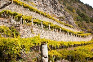 "In Valle d'Aosta il ""Mondial des Vins Extrêmes"" (12-14 luglio) ed Enovitis Extrême (19 luglio)"