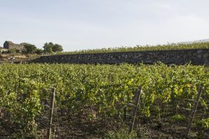 Farinetti on Etna: joint venture, Borgogno and Tornatore buy Villa dei Baroni