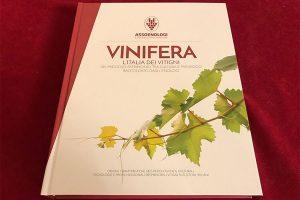 """A """"Vinifera - L'Italia dei Vitigni"""", l'""""enciclopedia del sapere"""" di Assoenologi, il Premio Oiv"""