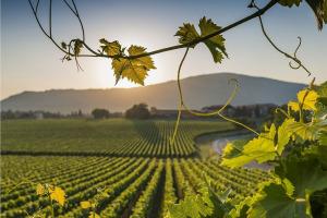 I Quaderni di WineNews - La Franciacorta
