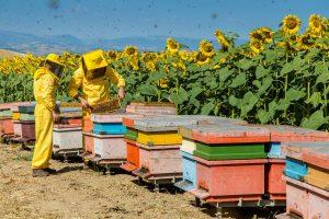 Allarme miele cinese, Unaapi chiede l'intervento del Ministro delle Politiche Agricole Centinaio