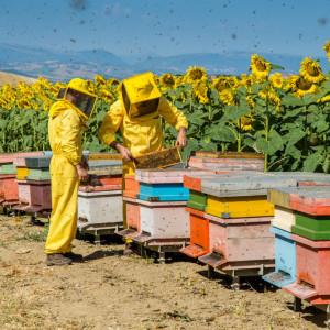 Dalla Pac al riconoscimento del ruolo delle api in agricoltura, l'appello degli apicoltori italiani