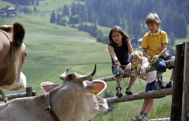 AGRITURISMO, Coldiretti, ISTAT, TURISMO, Non Solo Vino