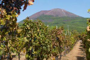 I Vini del Vesuvio con la Westminster Business School per crescere sui mercati e in popolarità