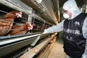 L'attività di controllo della filiera agroalimentare nel 2017 ha coinvolto 348.000 stabilimenti