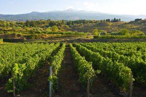Breve storia del vino siciliano