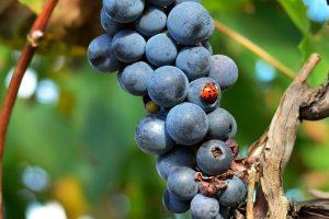 L'Italia del vino biologico e biodinamico: a Festambiente premiati i migliori da tutta Italia