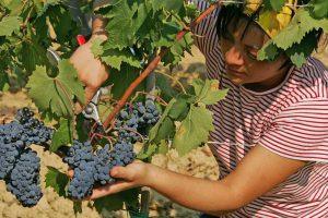 Via libera alla procedura Inps per l'utilizzo dei voucher in agricoltura: lo ricorda la Coldiretti