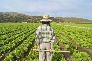 Con il via libera del Senato al Dl Dignità è ufficiale il ritorno dei voucher in agricoltura