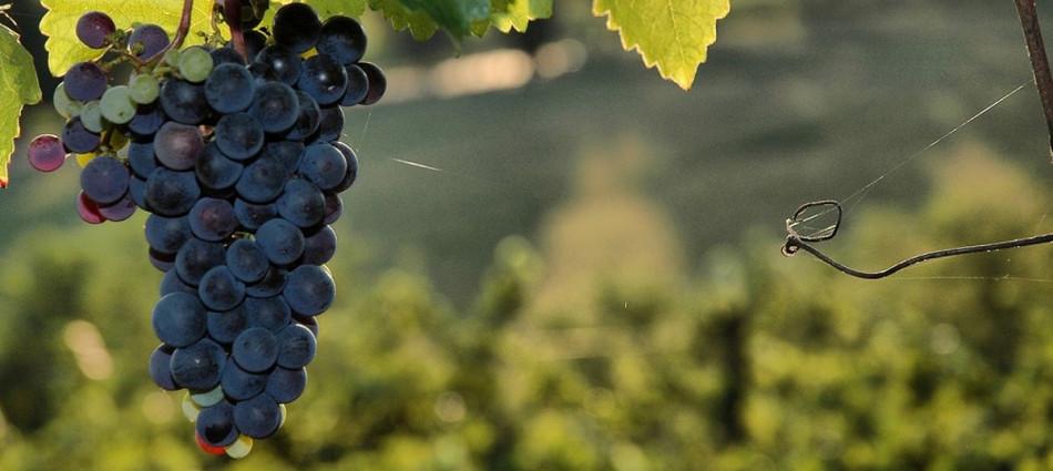 Tra vigneto e mercati, lo stato dell'arte dei big del vino nel Global Market Report by Ciatti