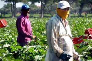 La piaga del caporalato tra controlli, lavoro nero e filiera secondo le associazioni agricole