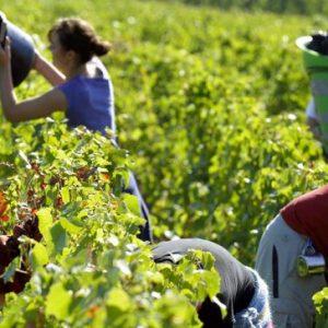 Harvest, agricultural associations optimistic