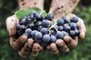 Francia: la proposta per una definizione legale del vino naturale arriva dall'estrema destra