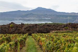 I Quaderni di WineNews - L'Etna