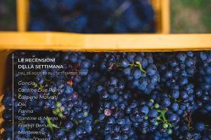 I Vini di WineNews - N. 12