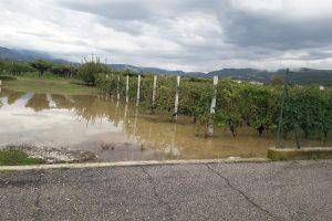 Allarme pioggia tra i filari della Valpolicella, ma per il Consorzio la vendemmia non è compromessa