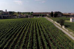 Esaltare i profumi del terroir per celebrare vino e vendemmia: da Guido Berlucchi, in Franciacorta