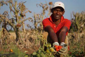 Coldiretti a Di Maio: approvare la riforma dei reati alimentari della Commissione Agromafie