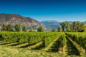 "Franciacorta ""Wine Region of the Year""?"