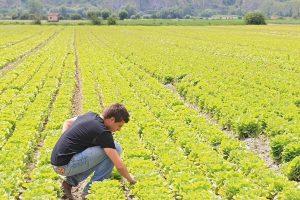 Sempre più imprese in agricoltura, giù ristorazione e alloggio: i dati del Ministero dell'Economia