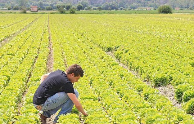 AGRICOLTURA, PARTITE IVA, RISTORAZIONE, Non Solo Vino