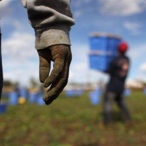 Buono, pulito e ... giusto: la sfida di Slow Food per un cibo libero dalle mafie