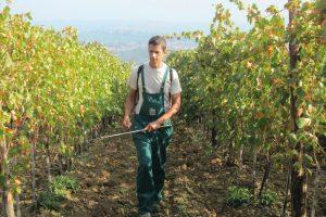 Rame, per la Commissione Ue il limite è da abbassare, ma a pagare sarebbero i produttori bio