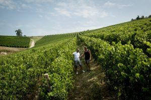 """Tedeschi e Università di Verona: così in Valpolicella varietà e territorio """"fanno"""" l'aroma dei vini"""