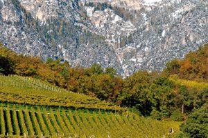 Le sette tendenze del vino globale protagoniste del 2019 secondo Bloomberg