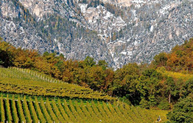 BLOOMBERG, TENDENZE 2019, vino, Mondo