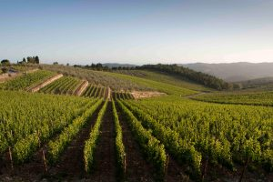 Wine & Finance: Velenosi issues a 3 million euro bond, Moncaro a new Swedish partner
