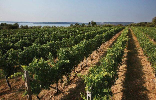 BARDOLINO, ENOTURISMO, LAGO DI GARDA, LUGANA, vino, WINE ENTHUSIAST, Italia