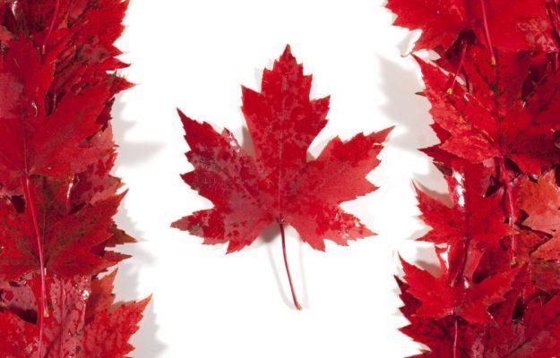 CANADA, MIBD ANALYTICS, PIEDMONT, QUEBEC, RESTAURANTS, TUSCANY, VENETO, WINE, News