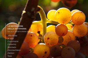 I Vini di WineNews - N. 15