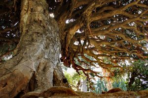 "The Palermo Botanical Garden is the new ""home"" of Sicily's native vines"