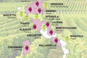 Quasi sconosciuti o protagonisti della scena viticola, i vitigni autoctoni in mostra a Bolzano