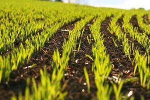 Al via la vendita di 7.700 ettari di terreni della Banca Nazionale delle Terre agricole di Ismea