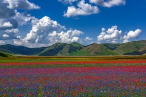 A due anni dal terremoto, nei territori agricoli di Lazio, Marche, Umbria e Abruzzo