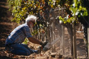 """Simonit & Sirch"", the most famous vine pruners in the world"